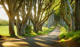 Le barriere scure, un viale degli alberi di faggio lungo la strada di Bregagh in contea Antrim, Irlanda del Nord immagini stock