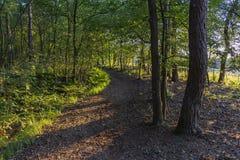 """Le bas soleil brille à un chemin par la forêt a appelé """"les contrebandiers itinéraire """"près de Strijbeek, Pays-Bas photos stock"""