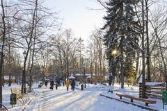 Le bas soleil d'hiver par jour givré en parc de ville Image stock