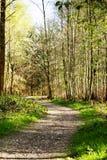 Le bas soleil par des arbres dans les bois Images libres de droits