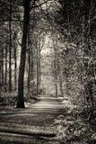 Le bas soleil par des arbres dans les bois Image libre de droits