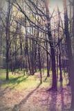 Le bas soleil par des arbres dans les bois photos stock