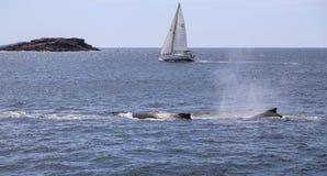 Le bateau dans des stephens de port, Australie Image stock