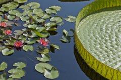Le bateau de mère--Jardin aquatique Photos libres de droits