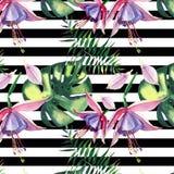Le beau beau modèle de fines herbes floral tropical coloré lumineux d'été d'Hawaï de la violette tropicale fleurit des orchidées  Image libre de droits