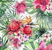 Le beau beau modèle de fines herbes floral tropical coloré lumineux d'été d'Hawaï des orchidées tropicales de ketmie de fleurs et Photographie stock libre de droits