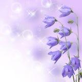Le beau bleu fleurit le campanula images libres de droits