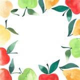 Le beau cadre de l'aquarelle de pommes et de poires remettent le croquis Photographie stock libre de droits