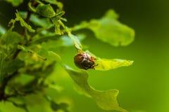 Le beau chêne vibrant part dans un jour d'été photographie stock
