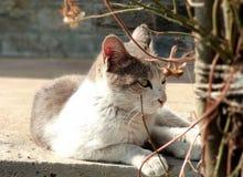 Le beau chat audacieux images libres de droits