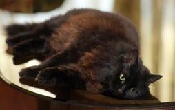 Le beau chat noir pelucheux se trouve sur une table en verre images stock
