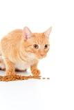 Le beau chat rouge mange de l'alimentation Photos libres de droits