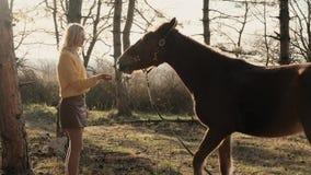 Le beau cheval calme grignote l'herbe dans le pré avec le mouvement lent de rayons lumineux du soleil clips vidéos