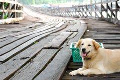 Le beau chien de Brown s'asseyent sur le pont en bois Photo libre de droits