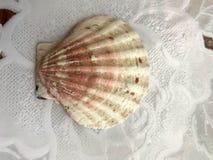Le beau feston de mer brun, coquille se trouve sur un fond blanc de tissu Fond tropical marin d'été photo libre de droits