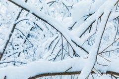 Le beau fond blanc d'hiver des branches des arbres dans la forêt ou en parc sous la neige photos libres de droits