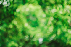 Le beau fond vert de bokeh Photo libre de droits