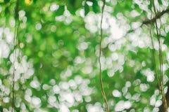 Le beau fond vert de bokeh Image libre de droits