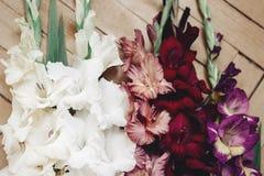 Le beau glaïeul dans différentes couleurs fleurit sur rustique en bois Images stock