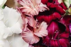 Le beau glaïeul dans différentes couleurs fleurit sur rustique en bois Photographie stock
