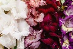 Le beau glaïeul fleurit le plan rapproché dans différentes couleurs sur le bois Photos stock