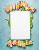 Le beau groupe lumineux de tulipes avec de l'eau chute sur le fond bleu avec la carte blanche vierge, vue supérieure, le cadre, e Images libres de droits