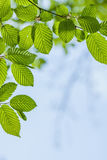 Le beau, harmonieux détail de forêt, avec le charme part photographie stock libre de droits