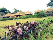 Le beau jardin Images stock