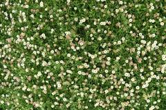 Le beau jardin d'été ou de ressort avec la marguerite fleurit Image libre de droits