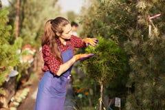 Le beau jardinier de fille habillé dans le tablier prend soin des usines dans le beau crèche-jardin un jour ensoleillé photos libres de droits