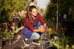 Le beau jardinier de fille habillé dans le tablier prend soin des usines se reposant sur le chemin de jardin dans la belle pépini image libre de droits