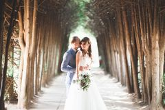 Le beau jeune couple de mariage est embrassant et souriant en parc Images libres de droits