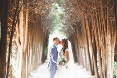 Le beau jeune couple de mariage est embrassant et souriant en parc Photographie stock