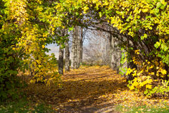 Le beau matin dans la forêt d'automne avec le soleil rayonne Images stock