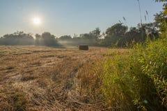 Le beau matin Sun rayonne le champ d'agriculteurs de ciel bleu Photos stock
