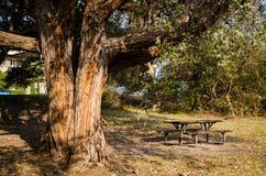 Le beau parc de banc dans la saison d'automne avec un grand arbre et le coucher du soleil chaud s'allument à Sydney, Australie photographie stock