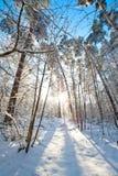 Le beau paysage d'hiver avec la neige a couvert des arbres - jour d'hiver ensoleillé Image stock