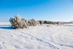 Le beau paysage d'hiver avec la neige a couvert des arbres - jour d'hiver ensoleillé Image libre de droits