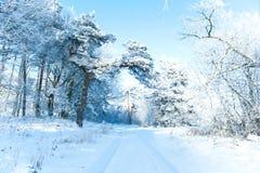 Le beau paysage d'hiver avec la neige a couvert des arbres - jour d'hiver ensoleillé Images stock