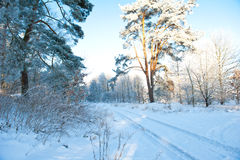 Le beau paysage d'hiver avec la neige a couvert des arbres - jour d'hiver ensoleillé Photo libre de droits