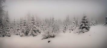 Le beau paysage d'hiver avec la neige fraîche a couvert les arbres impeccables photographie stock libre de droits