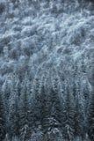 Le beau paysage d'hiver, neige a couvert des arbres Photos stock