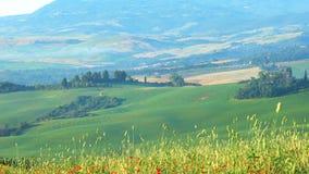 Le beau paysage de la colline verte de la Toscane avec le champ du pavot rouge fleurit clips vidéos