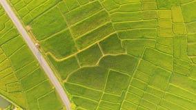 Le beau paysage des gisements de riz images libres de droits