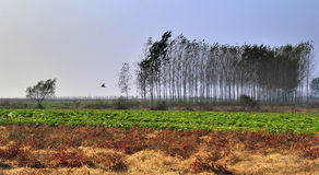 Le beau paysage en automne photos libres de droits