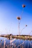 Le beau paysage sur la banque de la rivière couvre de chaume le plan rapproché Photos stock