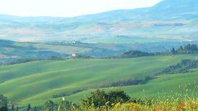 Le beau paysage toscan en été avec le pavot rouge fleurit le balancement dans le vent clips vidéos
