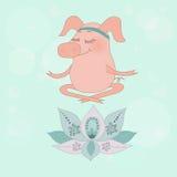 Le beau porc heureux se repose aveuglément dans une pose de lotus Images stock