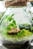 Le beau pot avec la forêt vivante, sauvent l'idée de la terre Photographie stock libre de droits
