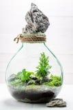 Le beau pot avec le morceau de forêt, sauvent l'idée de la terre Photos libres de droits